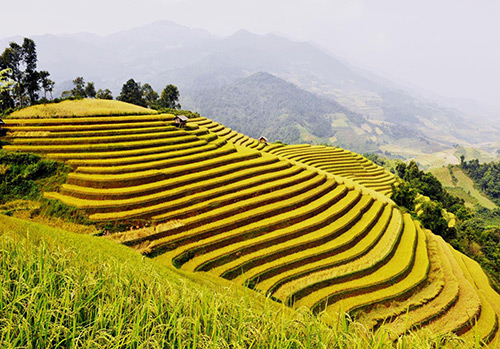 Sapa Terraced Fields